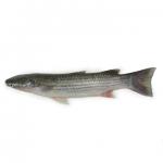 Khoilla Fish (খৈল্যা মাছ)