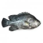 Koi Koral (কৈ কোড়াল)