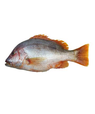 Lal Koral (লাল কোড়াল)