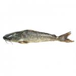 Rita Fish (রিঠা মাছ)
