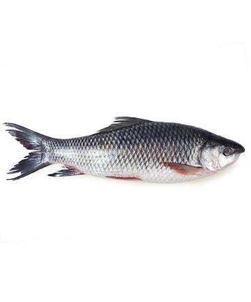 Rui Fish (রুই মাছ)