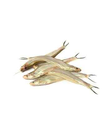 Batashi Fish (বাতাসি)